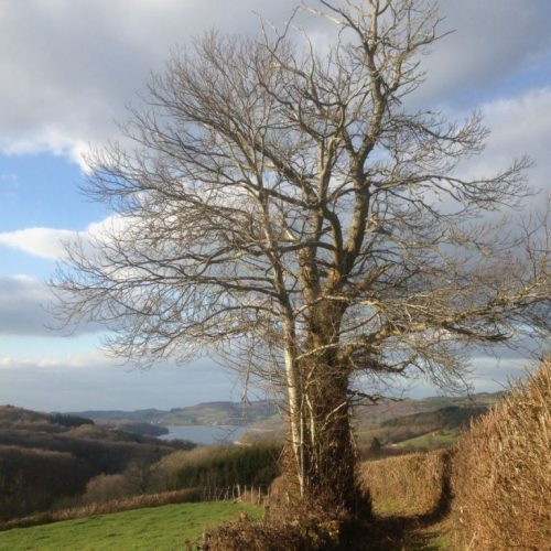 boom met uitzicht op lac de panneciere. jpeg copy